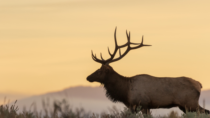 Can You Hunt Elk With A 270?